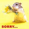 Grusskarte_sorry